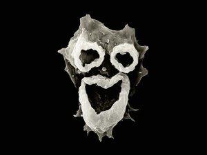brain-eating-amoeba-water-park_69932_600x450