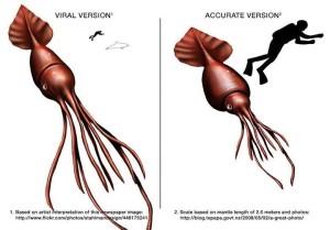 Vlevo virální oliheň, vpravo skutečné porovnání rozměrů největšího známého hlavnonožce s běžným potápěčem.